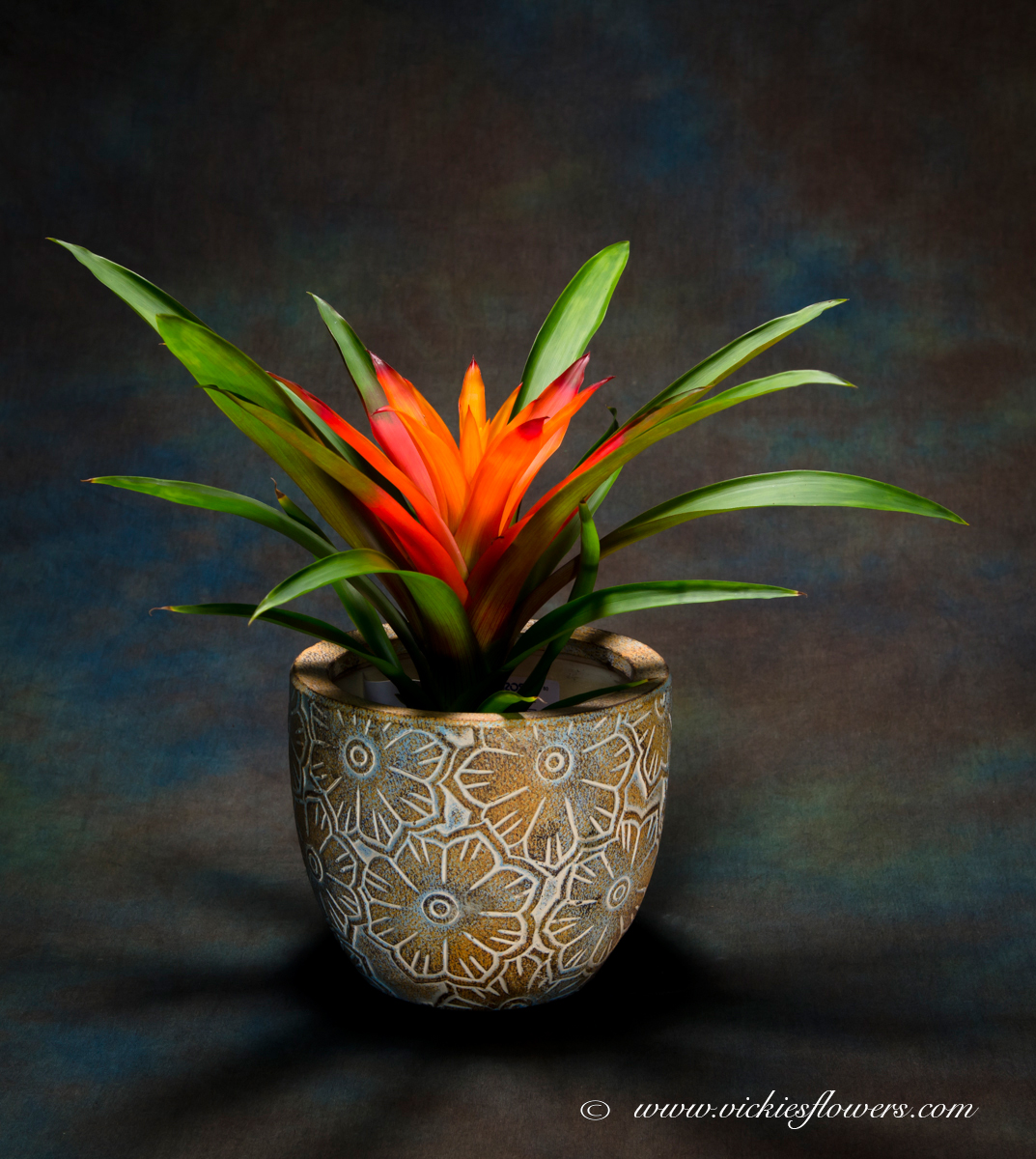 Indoor Plants IP   002 $45 (plus Tax And Delivery) Beautiful Pink Bromeliad  In Stone Vase. Bromeliads Are Colorful Year Around And.