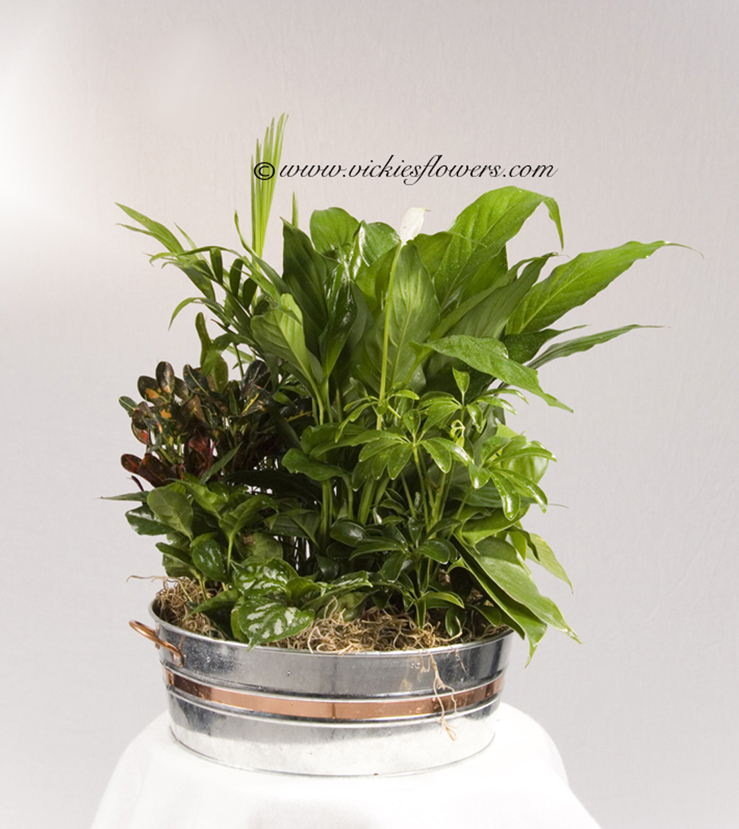 Indoor Plants For Home Office Green Plants Vickies Flowers