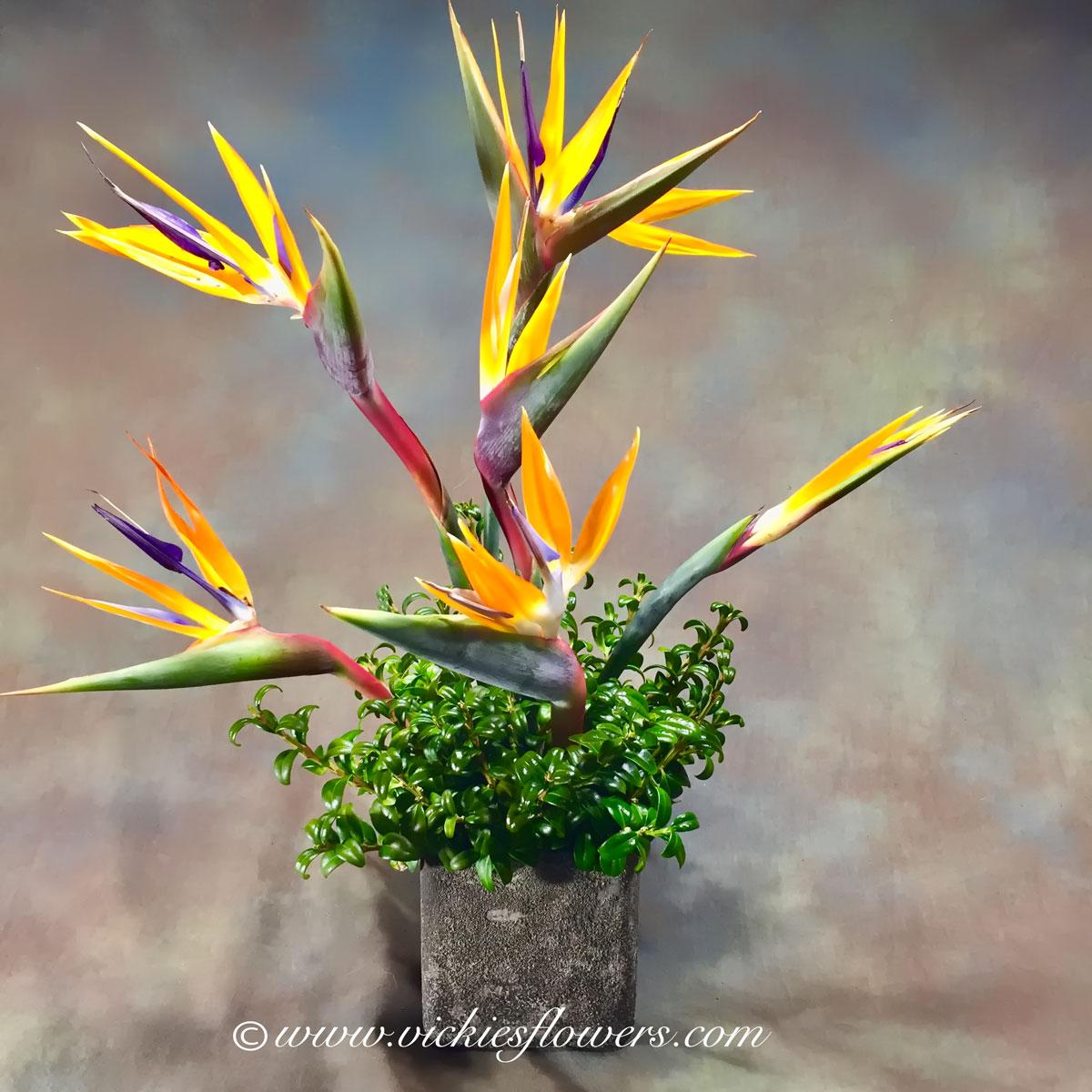 Ikebana asian flower arrangements vickies flowers brighton co ikebana oriental flowers ib 036 85 plus tax and delivery oriental and ikebana inspired birds of paradise in stone vase buycottarizona