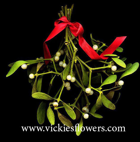 Photograph of Mistletoe poisonous to dogs and cats