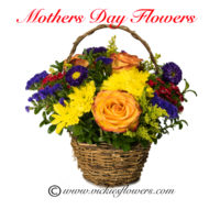 Classic Mothers Day flowering basket arrangement with Roses, Mums and Asters in a wicker basket